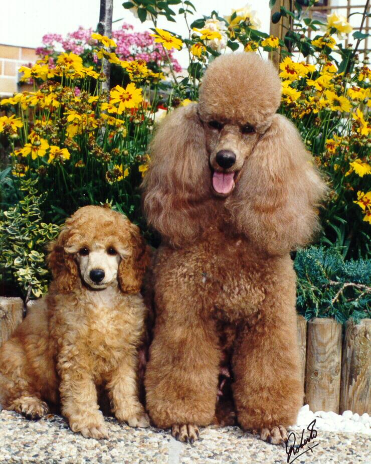 lefzen hund farbe